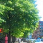 1 Million Trees--Not in my backyard