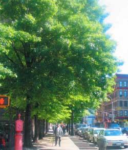 east_harlem_street