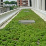 Money for Green Roofs