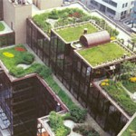 Green Roofs a Hit in Britain