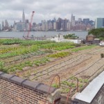 Greenpoint Farms