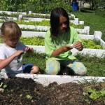 Growing Knowledge...One School Garden at a Time