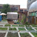 Digging In: Roots for Today's Urban Agricultural Movement