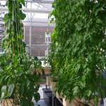 The Greenhouse that Keeps on Growing